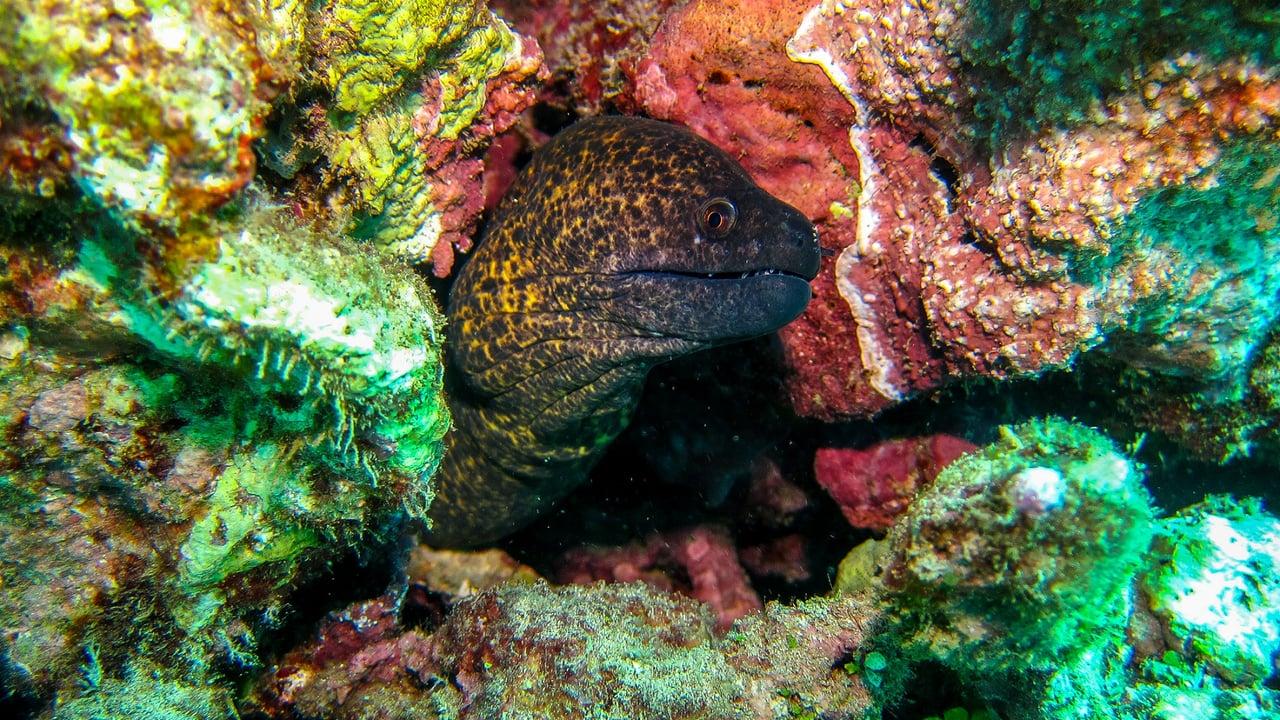 Underwater Kauai Hawaii Gopro Scuba Diving Na Pali